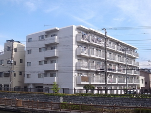 コスモ大島